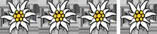 4-edelweiss